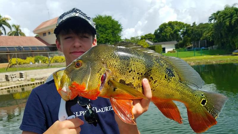 Fall Peacock Bass Fishing